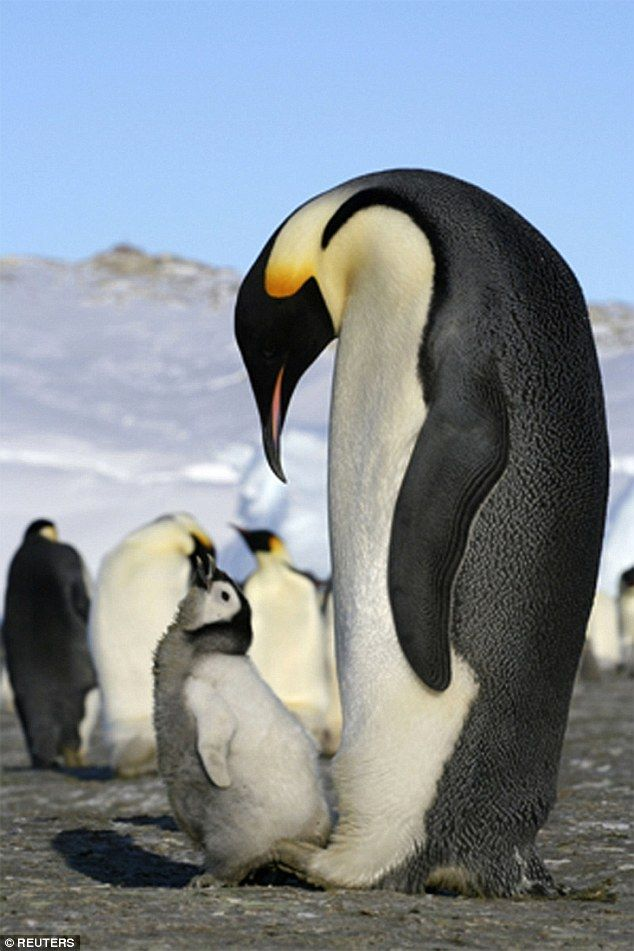 Penguins can't taste fish, according toa new book by the brains behind BBC quiz show QI, ...