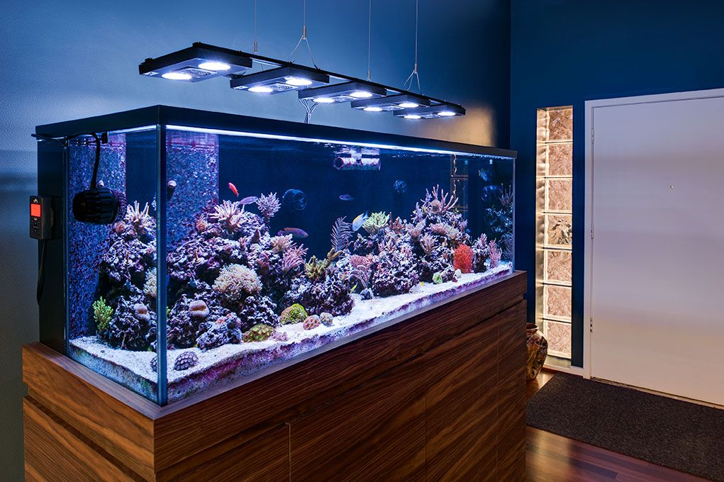 Aquarium Lighting Suspended With Griplock 174 Cable