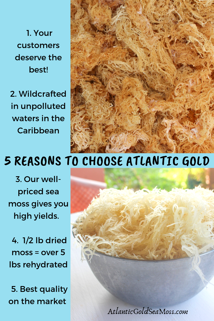 Give Your Customers High Quality Atlantic Gold Sea Moss Wildcrafted In The Pristine Ocean In The Caribbean Dried By The Sun Le Sea Moss Dr Sebi Recipes Moss
