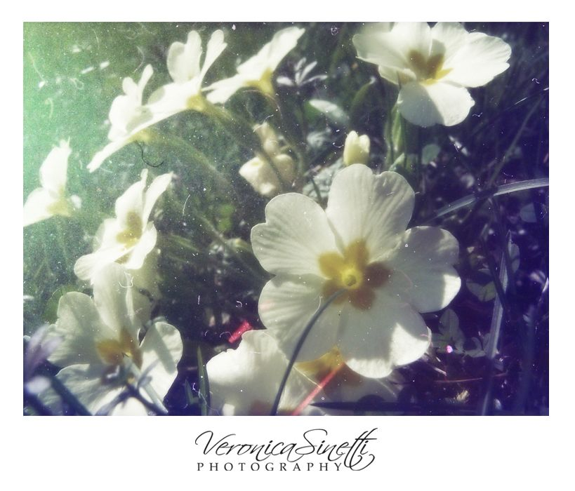 SPRING_Nature Series by vs-catonthemoon