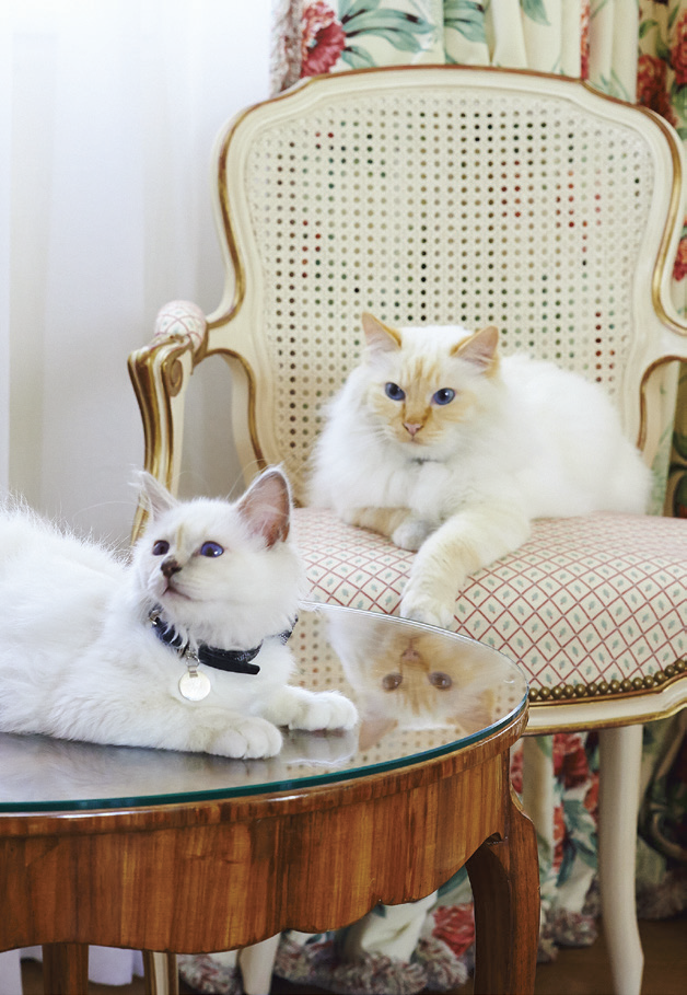 Hotel Pet Mascots You Ll Want To Travel The World To See With Images Paris Cat Cats Feline