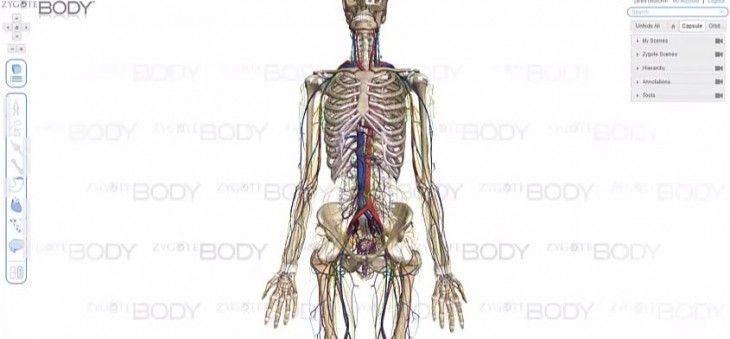 recursos para visualización y estudio del cuerpo humano | Ciencias ...