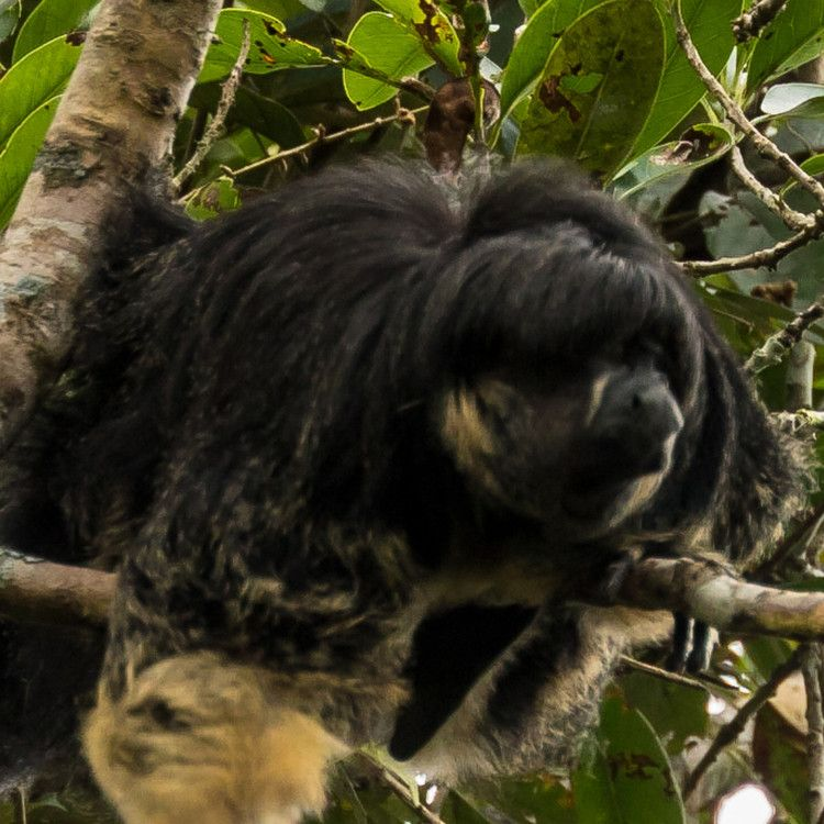 Mysterious Amazon Animal Seen Alive For First Time In 80 Years National Geographic Amazon Animals Animals Pet Birds