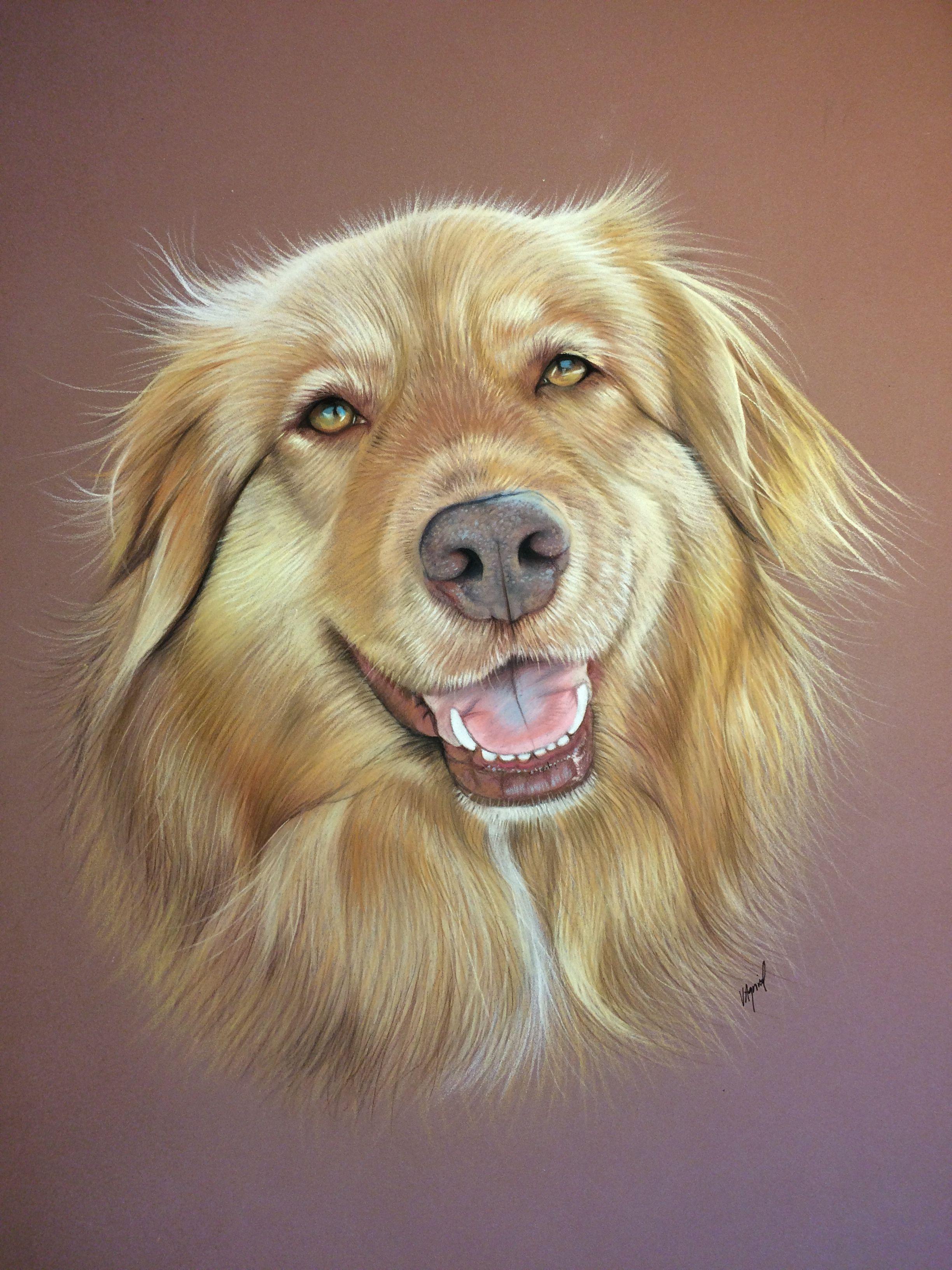 Portrait animalier dessin de berger australien au pastel - Animal dessin ...