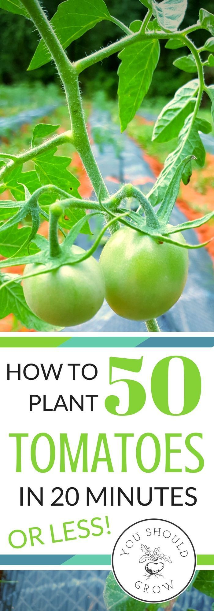 Find out the awesome tool we use to get 50 tomatoes in the ground in 20 minutes! Not only is it the fastest way to get plants in the garden, it will save you a lot of back and leg pain. Every gardener needs these amazing tools. via @whippoorwillgar