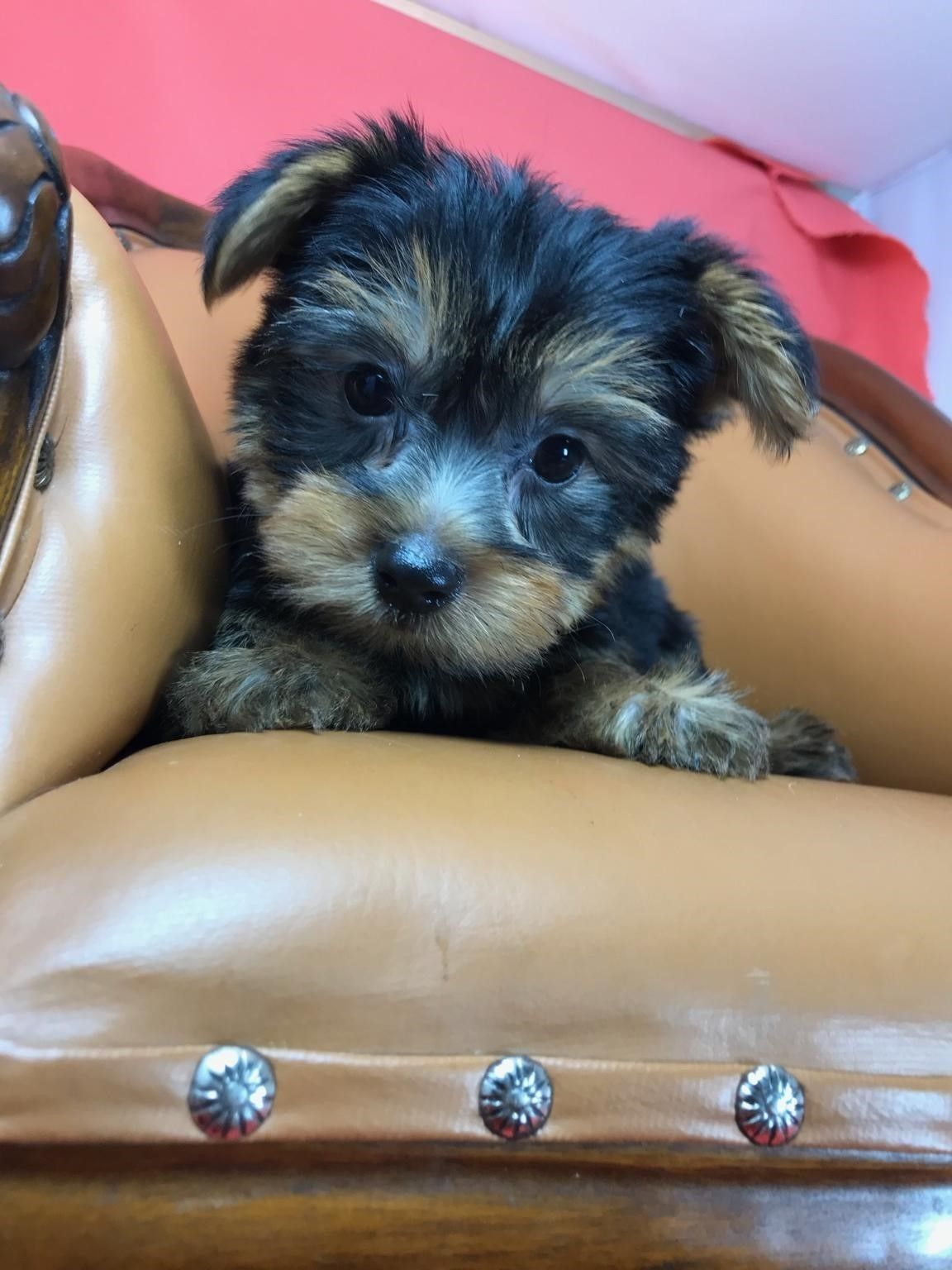 Pin By Lsn On Puppies Cute Puppies Puppies Animals