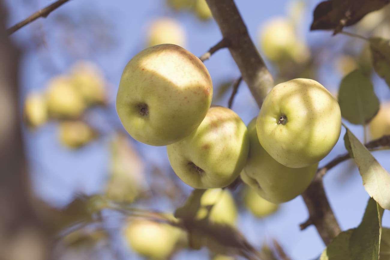 Faithfulness  A Powerful Fruit Grown By Powerful Promises