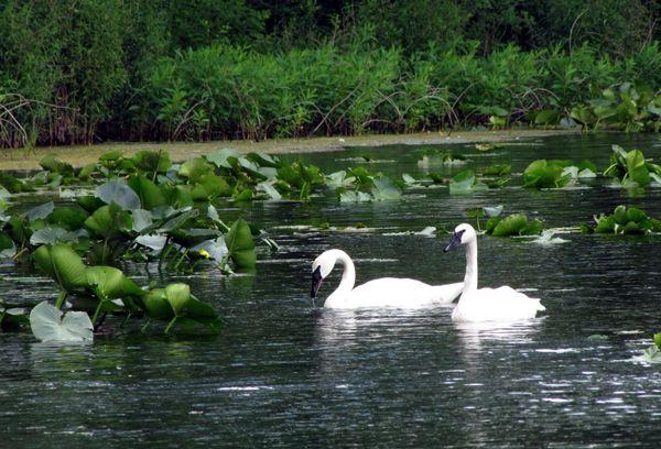 f35fbe791c26340a8618f3d2a3030dba - Hidden Lake Gardens In Tipton Michigan