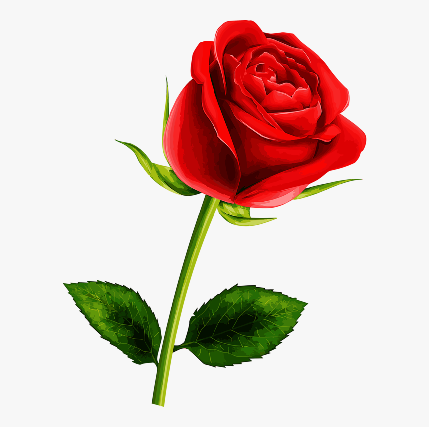 The Best Single Rose Flower Image Hd And Description In 2020 Flower Images Love Rose Flower Flower Clipart