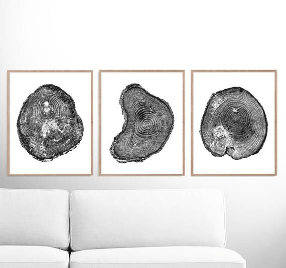 Tree rings print set of 3 prints black and white tree print printable pine