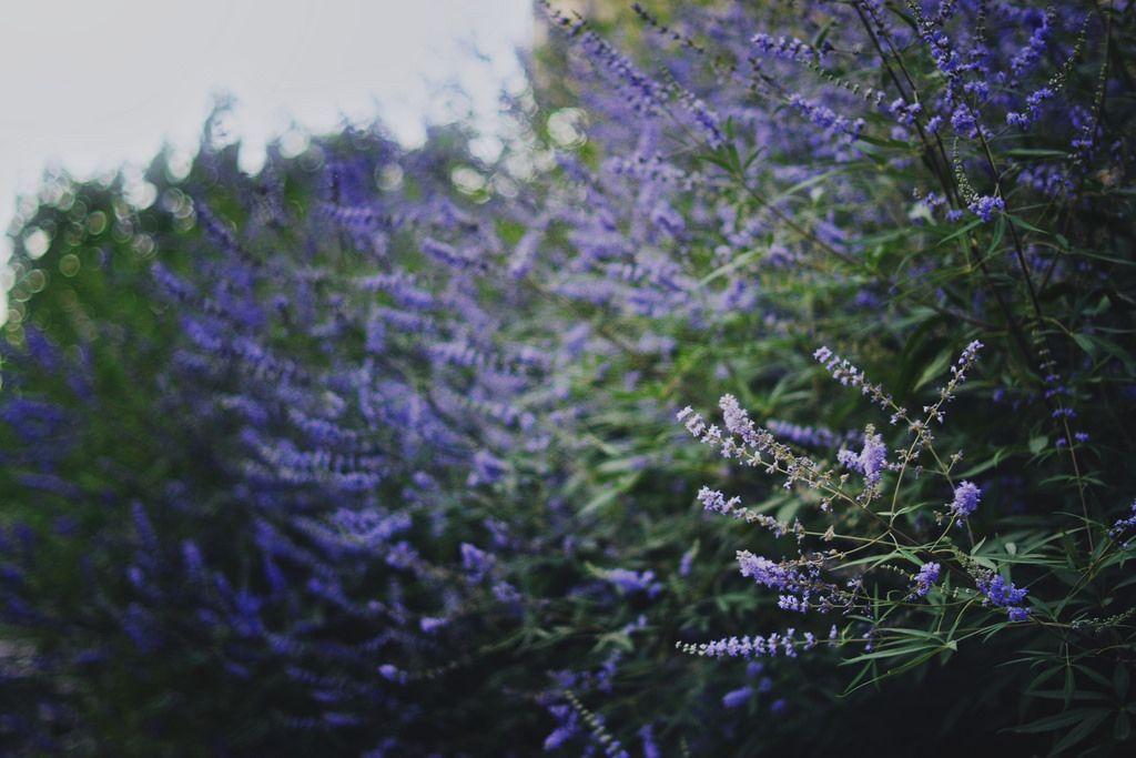 Via natureac http://natureac.tumblr.com/post/128153930503/floralac-flora-blog
