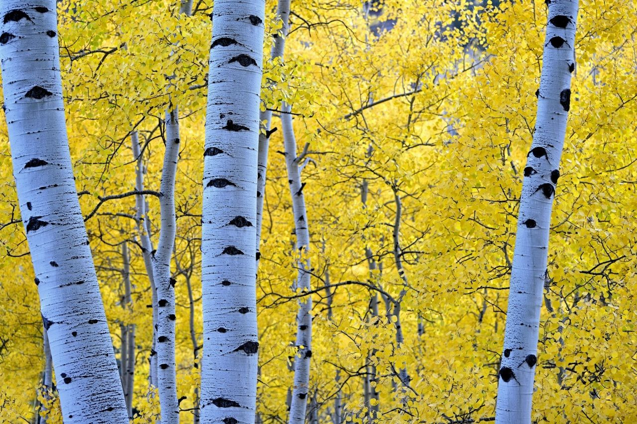 Autumn Seasons Trunk tree Branches Foliage Birch Nature