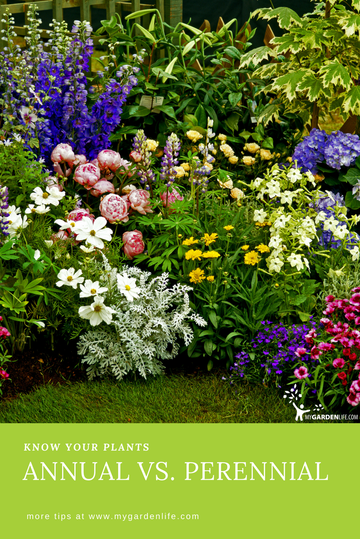 Cut through the confusion over which plants offer a one season pop know your plants annual vs perennial izmirmasajfo