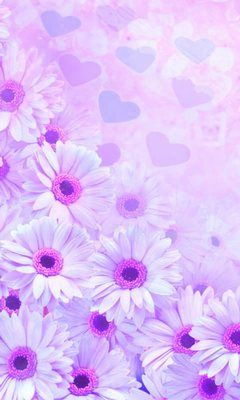 Download 240x400 Purple Flower Cell Phone Wallpaper Category