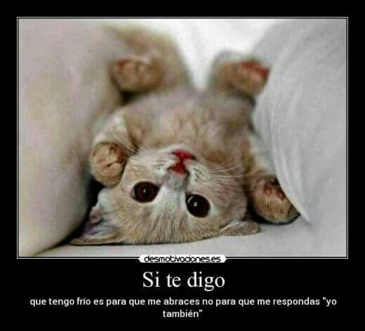 3 Parte Imagenes Con Frases Animals Cats Hamster