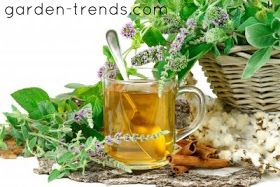 Garden Trends: HOW TO GROW AND HARVEST MINT FOR TEA