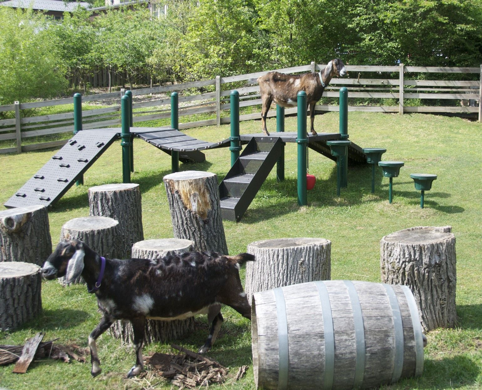 Goat Pen This Playground For Goats Let Them Climb And