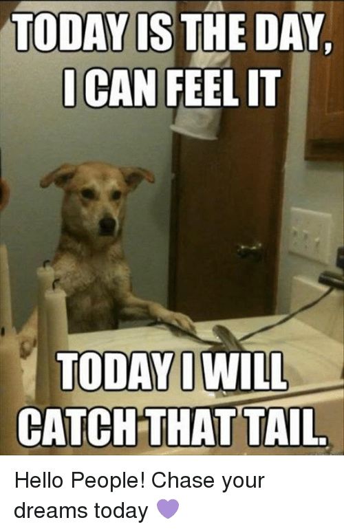 Today Is The Day I Can Feel It Today I Will Catch That Tail Hello People Chase Your Dreams Today Meme Https Dog Quotes Funny Funny Animal Memes Dog Memes