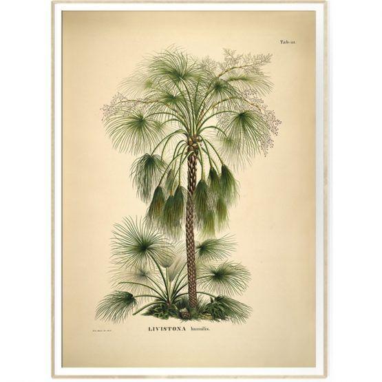 Botanical Palm Print Fra The Dybdahl Med Billeder Plakater Billeder Illustration