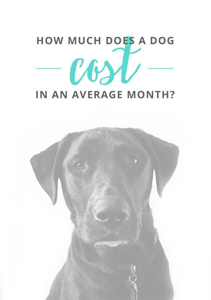 How Much Does It Cost To Have A Dog Per Month?