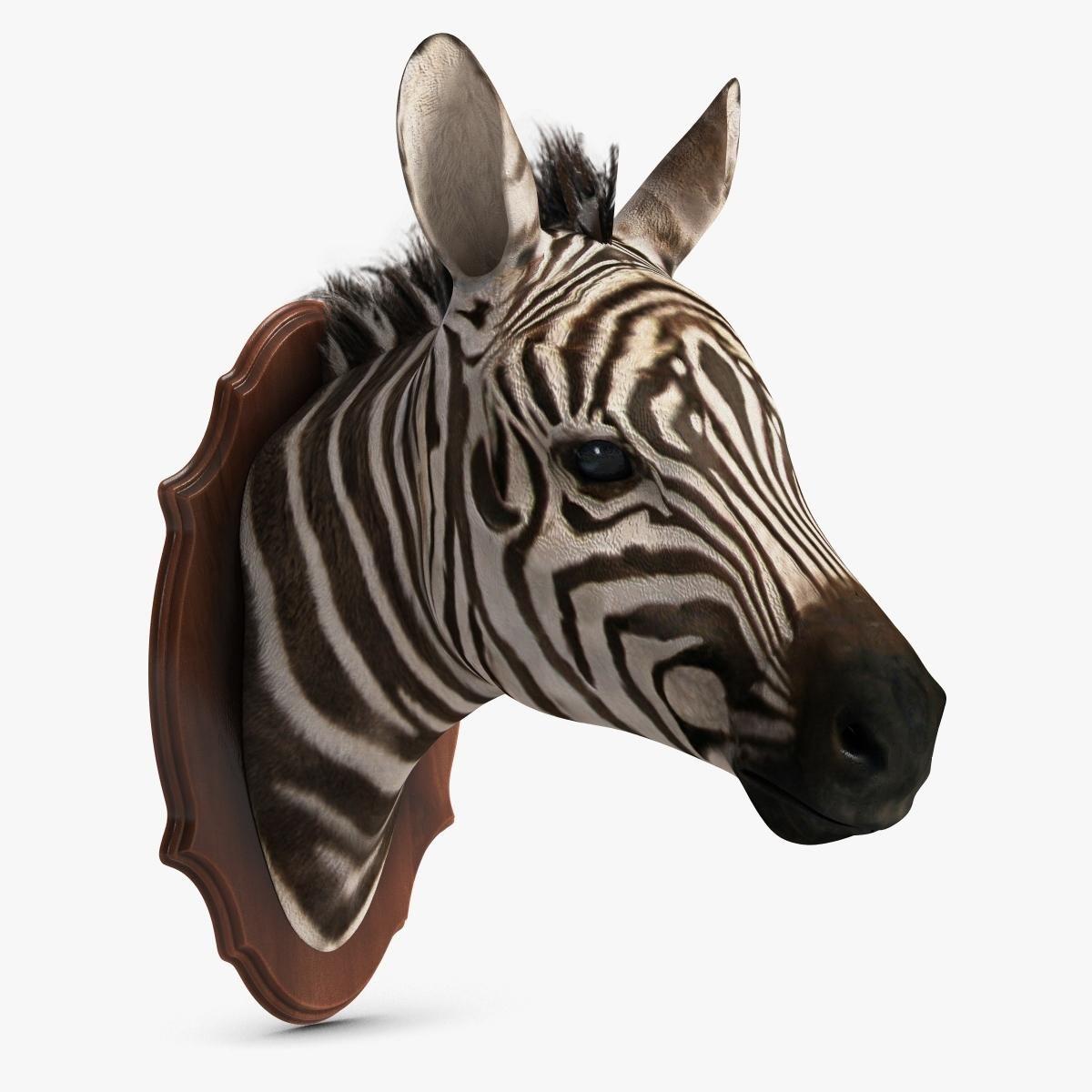 3d Model Of Zebra Hd 3d Model Zebra Model