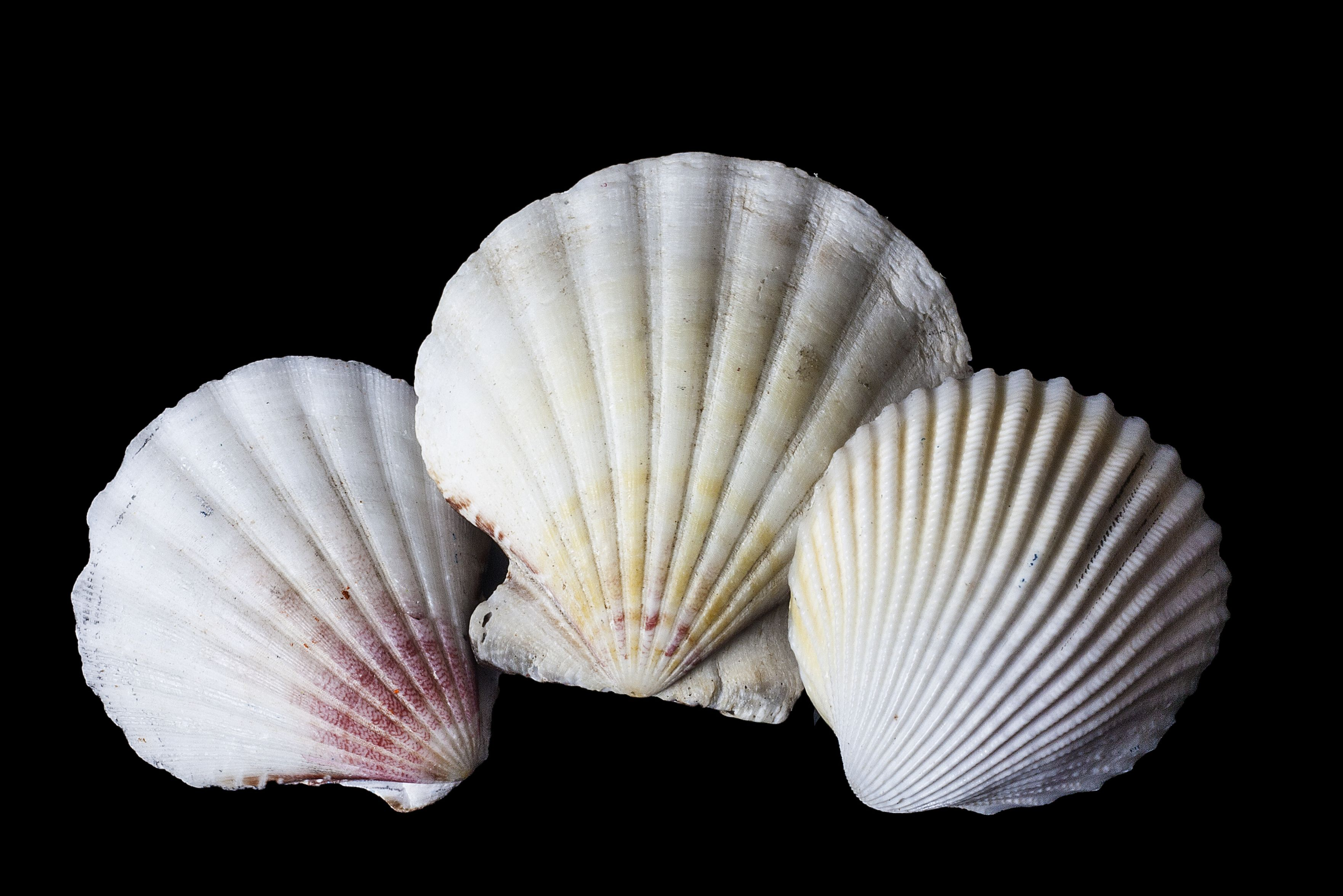 Year 10 Photography Shells | Shell