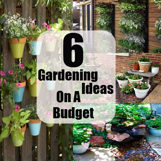 Awesome Gardening Ideas On A Budget (With images) | Budget ...