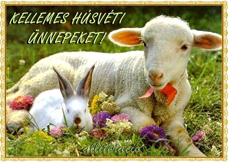 legszebb húsvéti idézetek húsvét, képek, versek, idézetek, bárány, szép, képeslap, | Cute