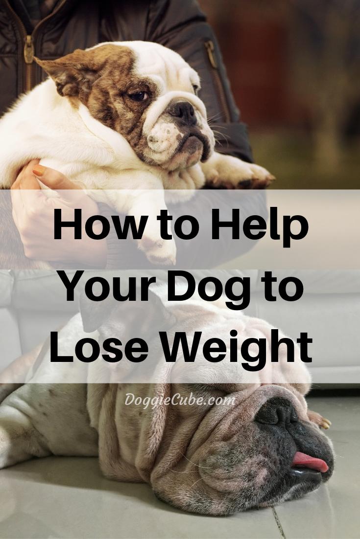 f36589cb01a5a543789e1990893c62f8 - How To Get My Overweight Dog To Lose Weight