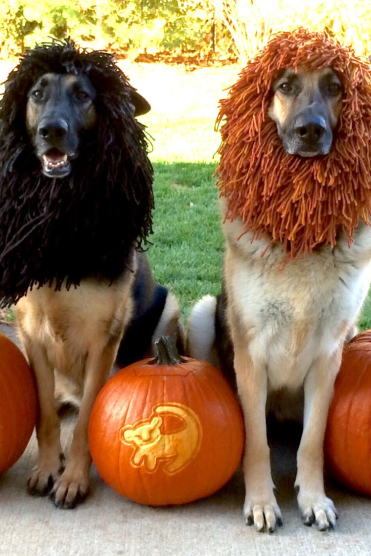 There S No Denying It Your Dog Needs This Halloween Costume