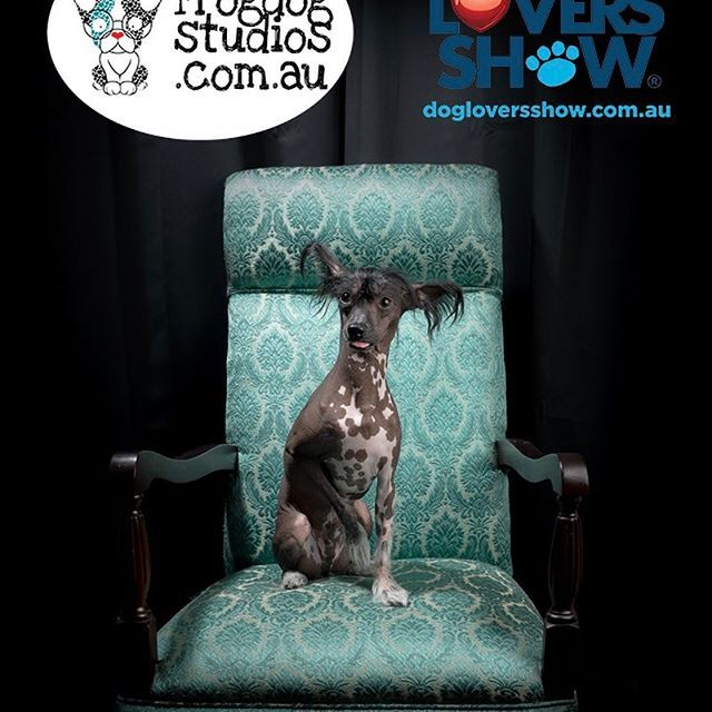 Day 3 Melbourne thedogloversshow with Marlon from