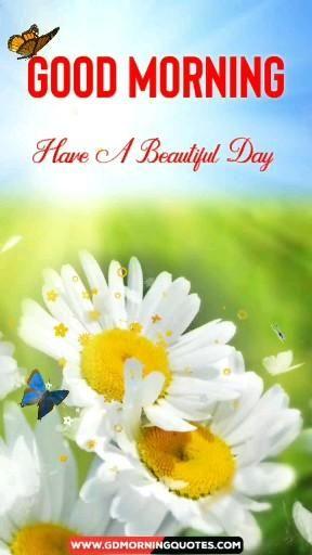Lovely Good Morning Video, Flowers Video, Good Morning Flower Video