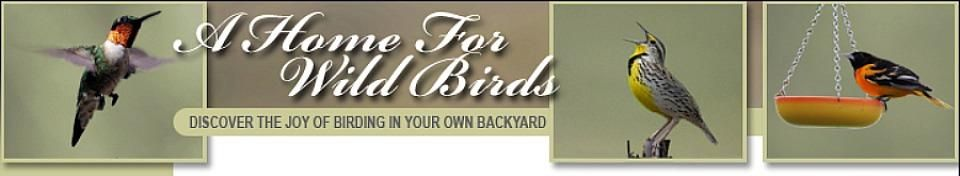 These Bird Food Recipes will Attract Wild Birds and Save You Money