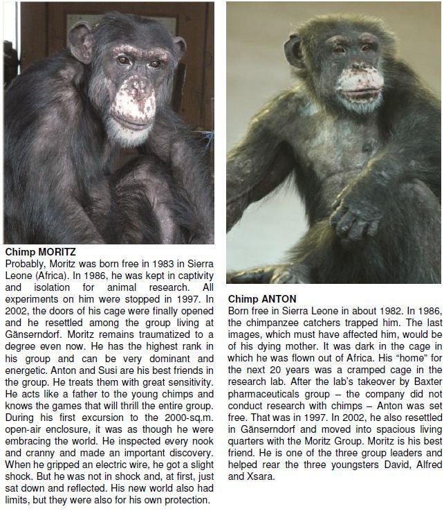 Gut Aiderbichl Michael Aufhauser Affen Tiere