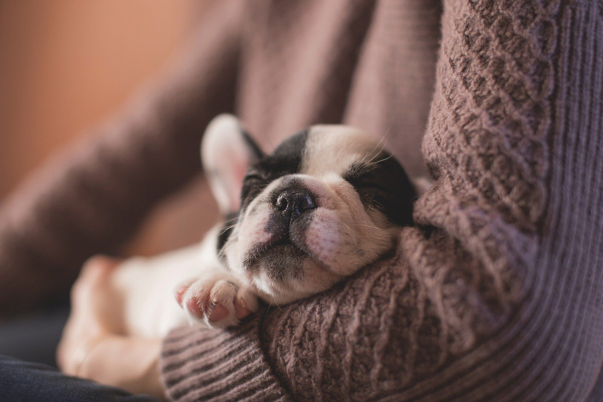 How To Help Your New Puppy Sleep Through The Night Sleeping