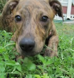 Adopt Hailey on #plotthound