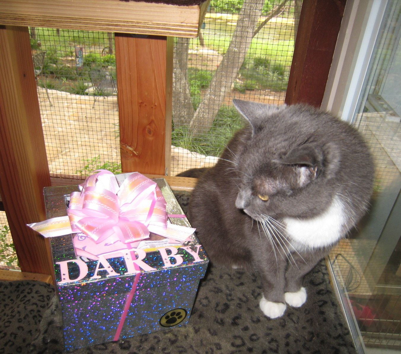 Happy Kitty Dog Gifts Happy Cat Get Well Gifts