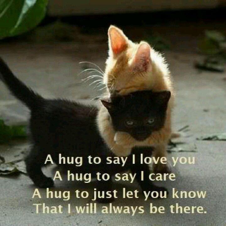 kittyhugs