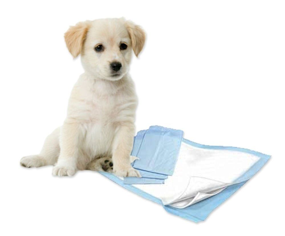 Petsutra Dog Potty Training Puppy Pads Dog Behaviour Puppy