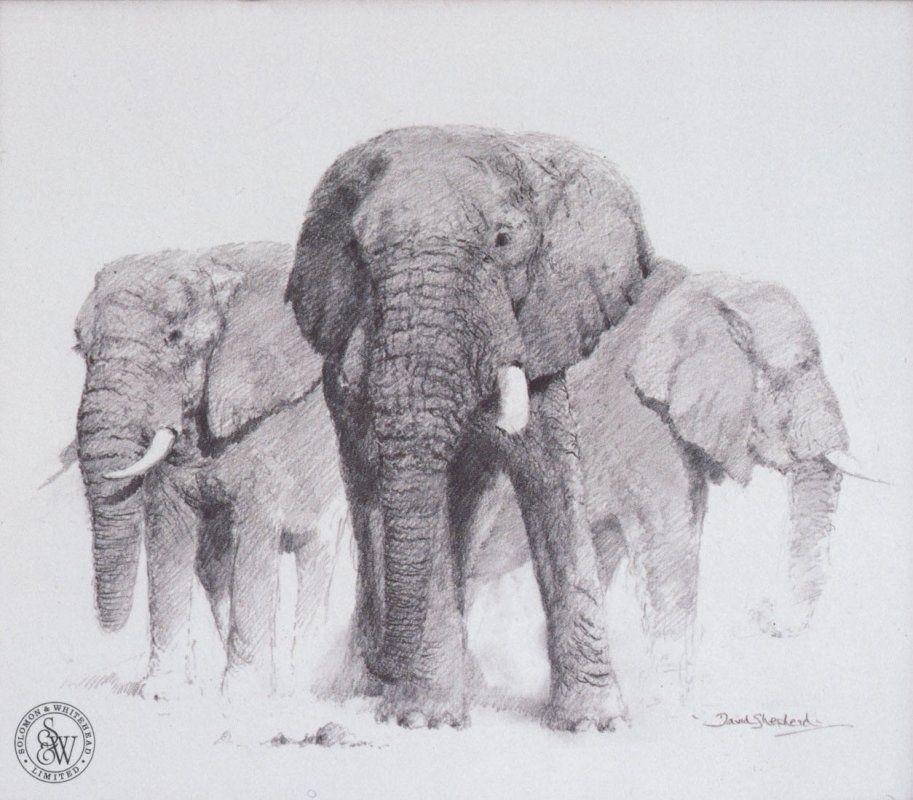 Elephants pencil drawing | Drawings | Pinterest | Drawings