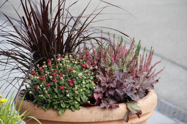 Galeria Zdjec Pomysly Na Jesienne Kompozycje W Donicach Ogrodowisko Flowers Plants Fall Decor