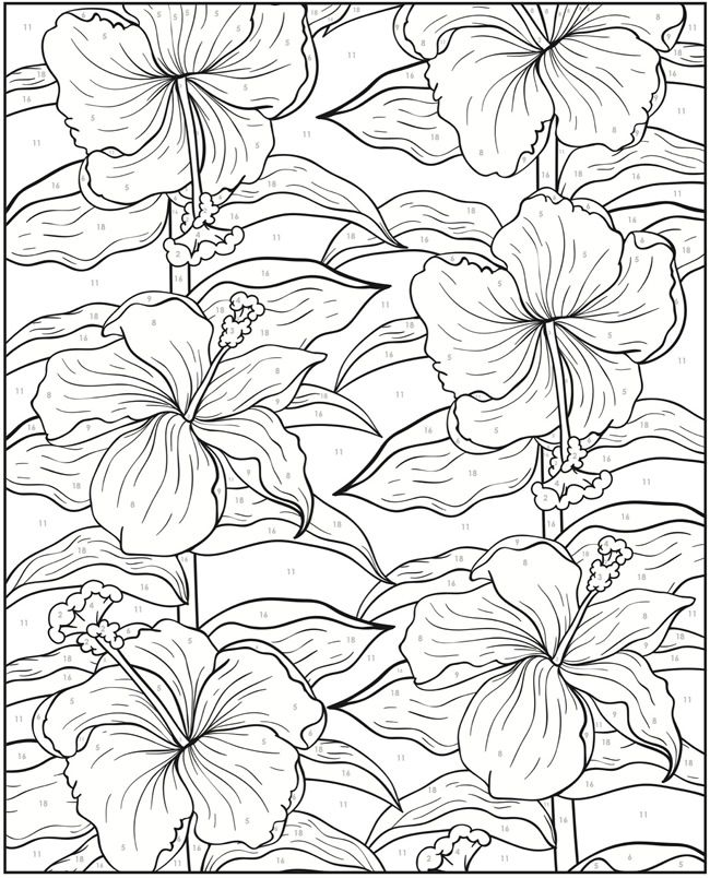 Welcome To Dover Publications Creative Haven Floral Design Color