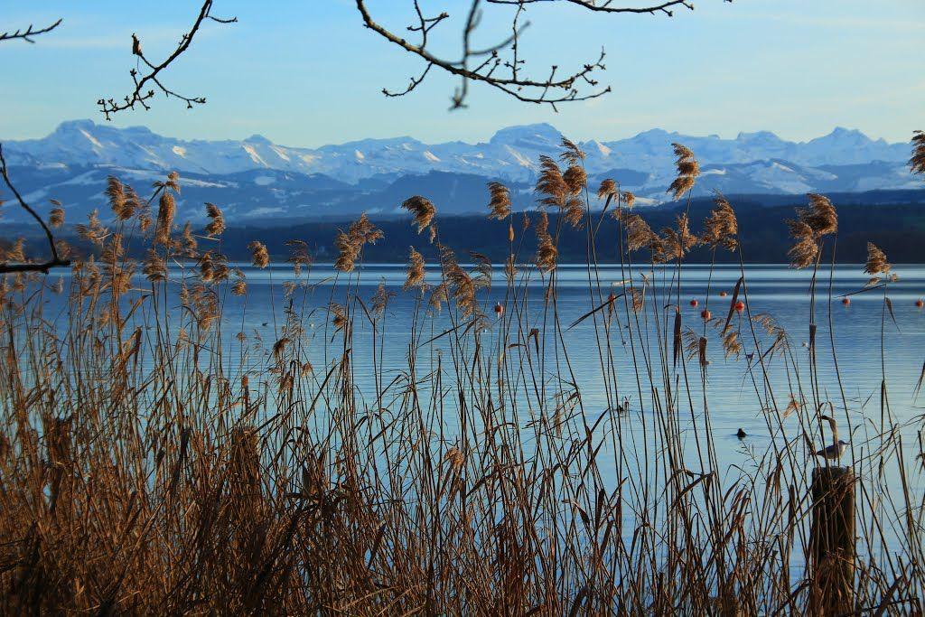 Ein Prachts-Neujahrstag am Greifensee, ZH
