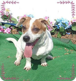 Pictures Of Shiloh Also See Royal A Beagle Mix For Adoption In