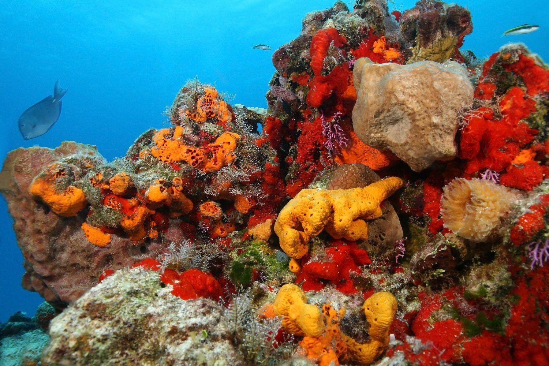 Seaspongesunderthesea editedg 15001000 sea sponges seaspongesunderthesea editedg 15001000 reviewsmspy