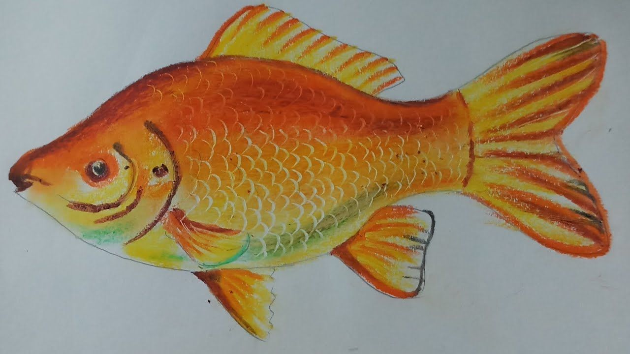 How To Draw A Gold Fish With Oil Pastel Kids Drawing Youtube Oil Pastel Drawing For Kids Oil Pastel Colours