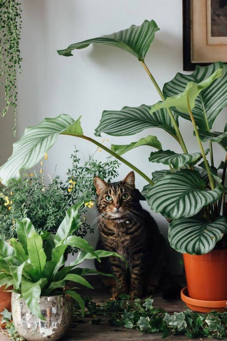 Cat Plants Safe