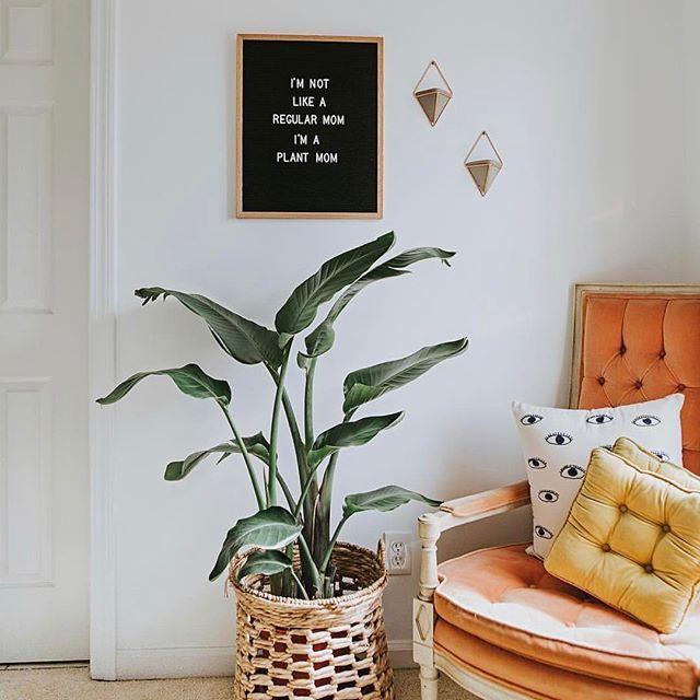 I M Not Like A Regular Mom I M A Plant Mom Plants Decor Interior Design Living Room