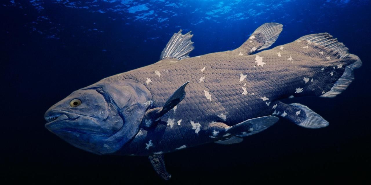Coelacanth Facts | Image Result For Coelacanth Sea Life Pinterest Shark And Animal