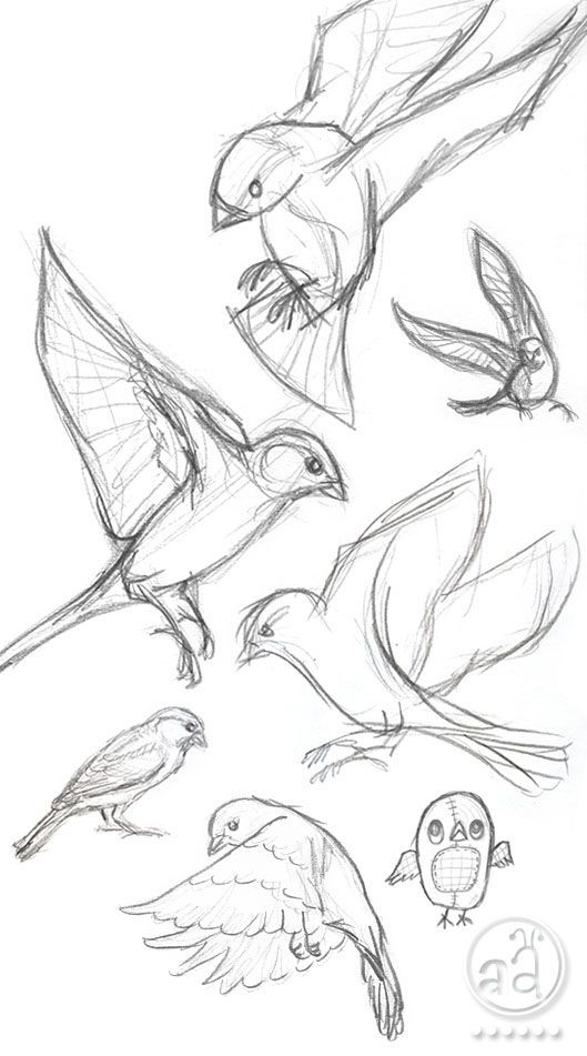 Photo of ::: Sketchy Sunday ::: birds
